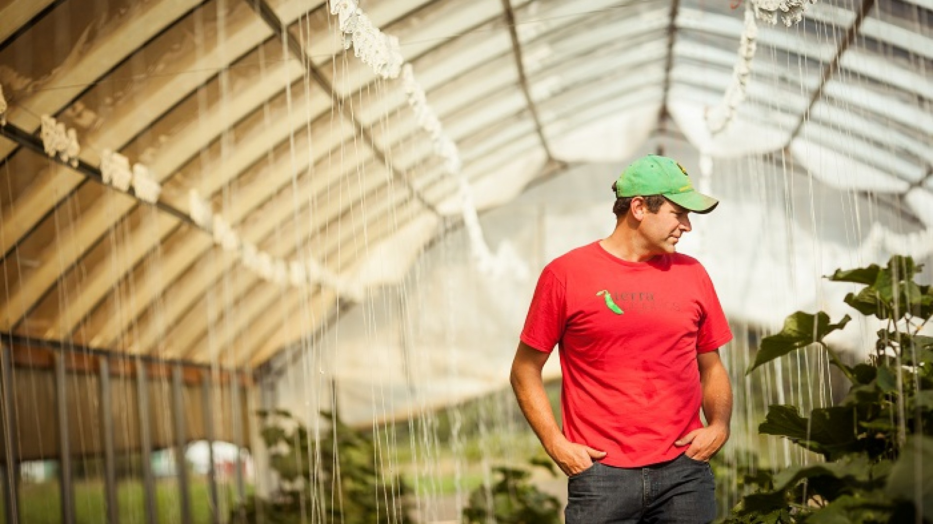 Picture of a white man in red T-shirt and green cap looking over plants in a greenhouse