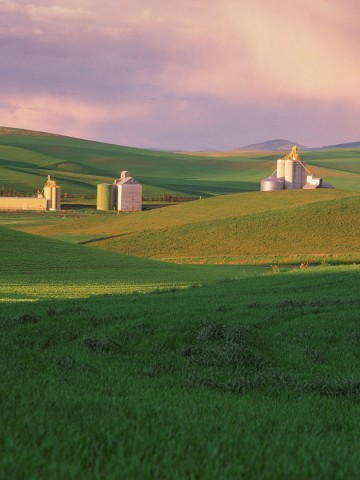 Image of lush green grain fields in foreground with a few white grain elevators in background